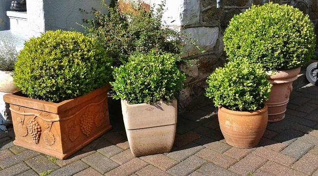 Plantas De Exterior Para Decorar La Terraza O El Jardín